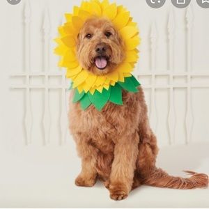 HYDE AND EEK  PET SUNFLOWER SET